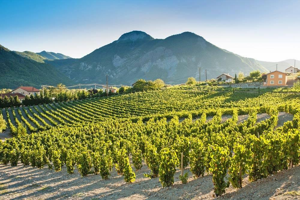 La Vignette, le plus haut vignoble des Alpes françaises