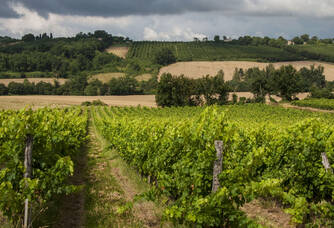 Vignoble du Château de Salles