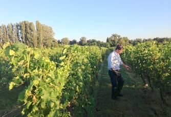 Travail dans les vignes Château Lescaneaut