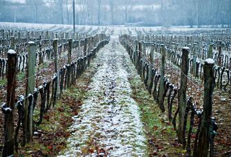 Vigne enneigée au Domaine Falgueyret Leglise