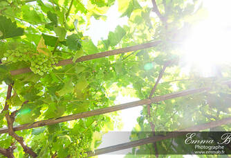 Soleil au Jas des Oliviers