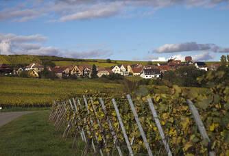 Au coeur des vignes du Domaine Wassler