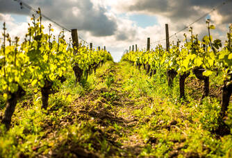 Au coeur du Vignobles Mourat