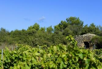Au coeur des vignes du Mas Roc de Bô