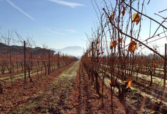 Les vignes du Domaine des Feraud pendant l'automne