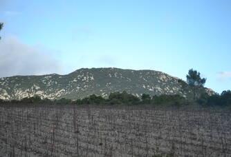 Les vignes du  Domaine Haut-Lirou