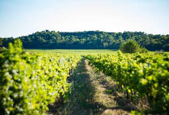 Les vignes du Domaine des Gravennes