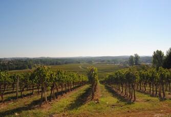Les vignes du Château de Francs