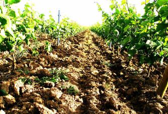 Au coeur des vignes de La Tourlaudière