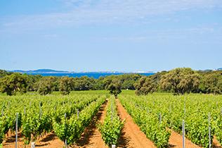 Région de Provence